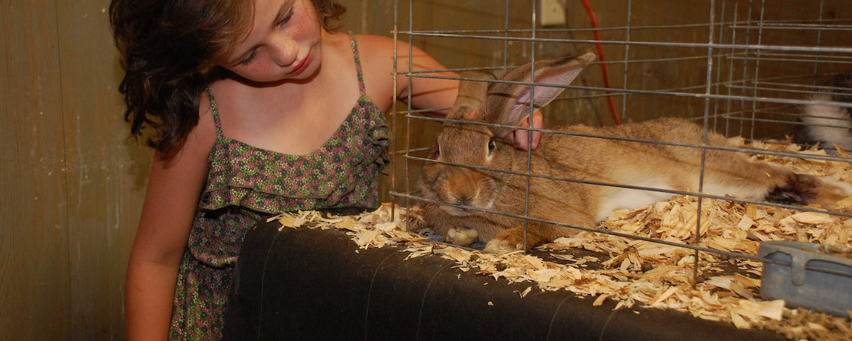 The sights, sounds and smells of the Wicomico County Fair