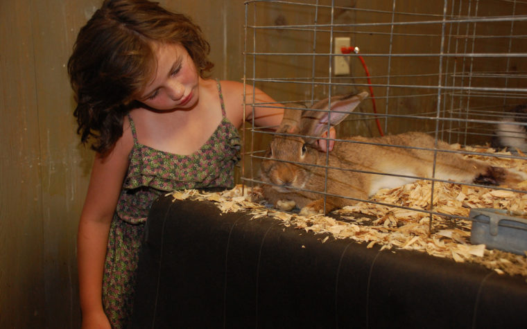 Girl with rabbit at Wicomico County Fair
